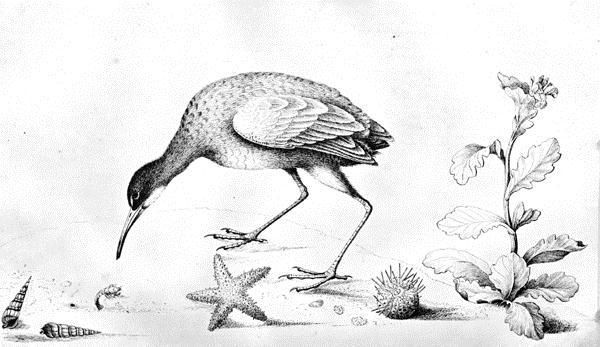 wb seabird